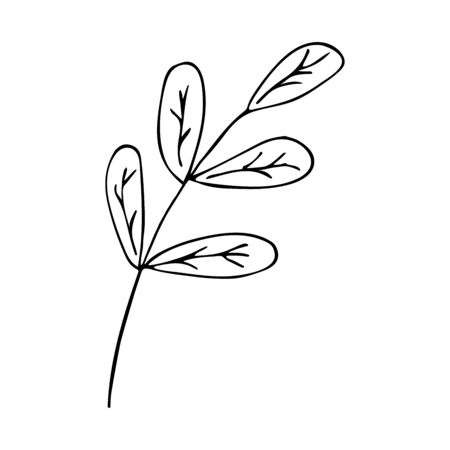 Sprig with leaves in doodle style. Black and white illustration spring and summer theme