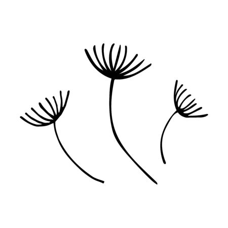 Dandelions flowers in doodle style. After the wind blows, empty. Black and white illustration, spring and summer flower