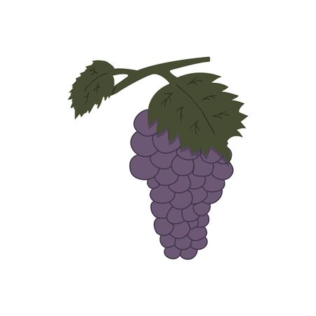 Twig of grapes on a white background. Colorful illustration in doodle style. Tasty and healthy berries from which wine is made vector Ilustrace