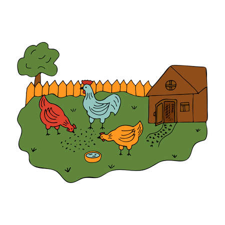 Courtyard in the village with walking hens and a cock. Colorful vector illustration in cartoon style. Poultry on a walk. Summer time. Coop in the yard. Country life Ilustração