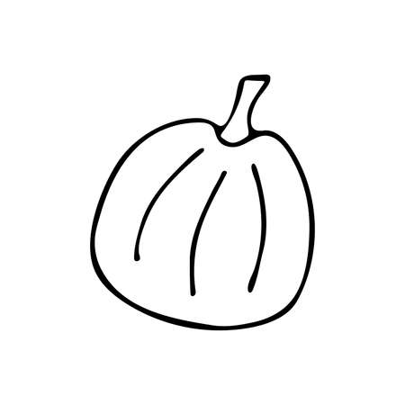 Pumpkin in Doodle style. Black and white vector. Concept holiday illustration. Happy Halloween. Harvesting