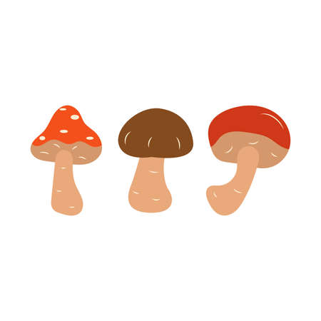 Mushrooms. Amanita, boletus, porcini mushroom. Autumn vector isolated illustration on a white background. Hand drawn