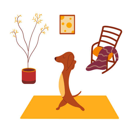Dachshund practices yoga and meditates standing on yoga mat. Yoga dog, relaxation and sports. Rocking chair and plaid, potted plant standing on the floor, painting on the wall. Room interior. Vector cartoon colorful illustration animal Illusztráció