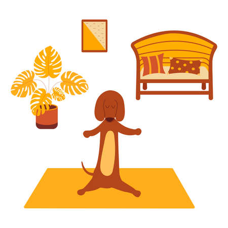 Dachshund practices yoga and meditates standing on yoga mat. Yoga dog, relaxation and sports. Painting on the wall, Monstera in a pot stands on the floor, sofa and pillows. Room interior. Vector isolated colorful cartoon illustration animal