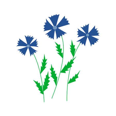 Cornflowers. Three wildflowers. Colorful hand drawn vector illustration