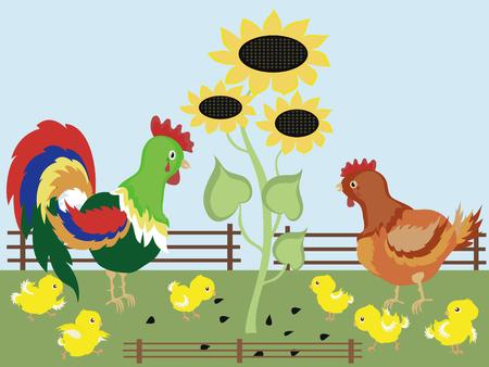 pollitos:   Gallo, gallina y pollos cerca de girasol.