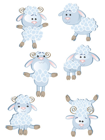 rams horns: Sheep