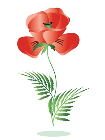 Red poppy Stock Vector - 9578341