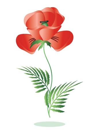 armistice: Red poppy