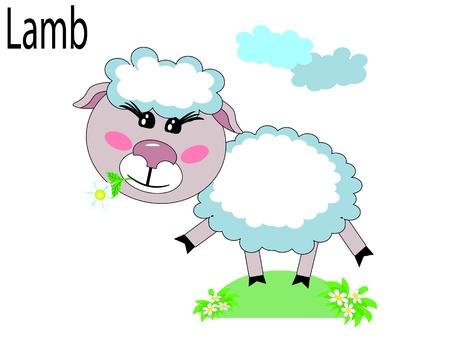 lamb cartoon:   Vector animals,lamb
