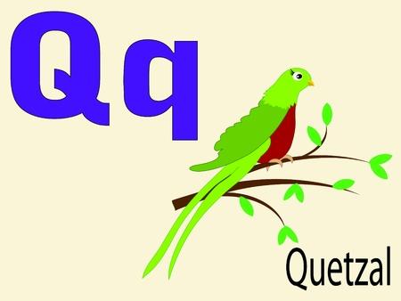 niño preescolar: Animal alfabeto Q Vectores