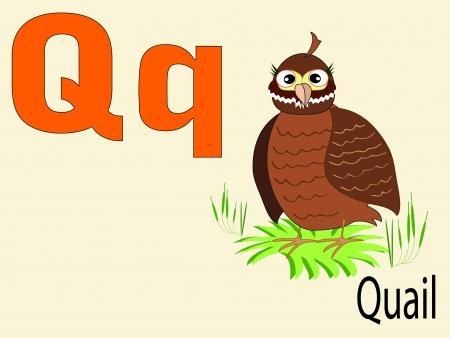 CODORNIZ: Animal alfabeto Q Vectores