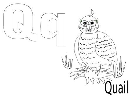CODORNIZ: Alfabeto para colorear para niños, Q