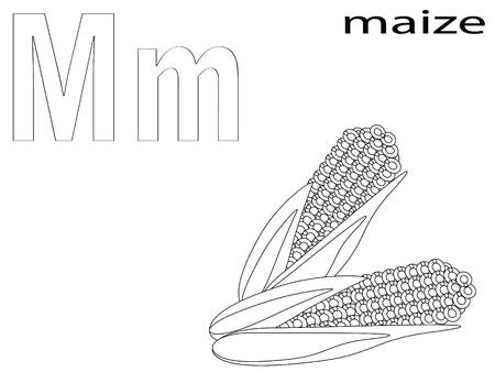 planta de maiz: Alfabeto para colorear para los niños, M