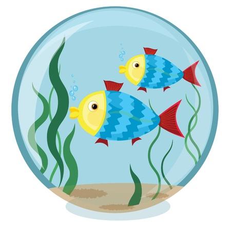 fish bowl: Aquarium  Illustration
