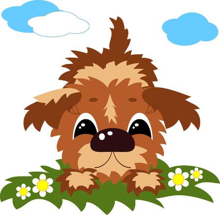 lap dog: Cane carina
