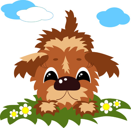 lap dog: Cute dog