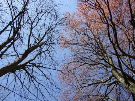 Early spring trees in upward view Stock Photo