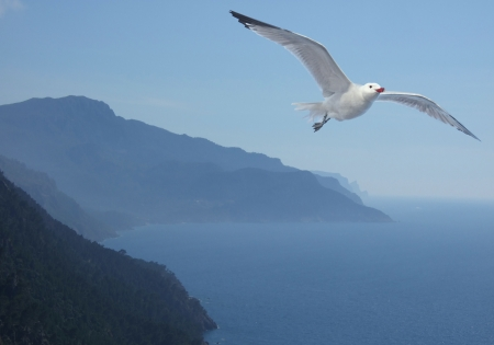 Romantic portrait of a Seagull - Larus audouinii - flying high above landscape with mountains and sea  Stock Photo