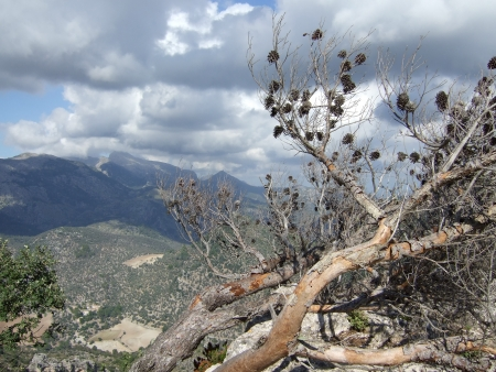 View from Castell d Alaro - Sierra Tramuntana - Majorca