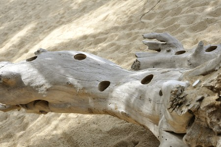 Driftwood on the Nha Trang Beach, Vietnam Stock Photo - 8139943