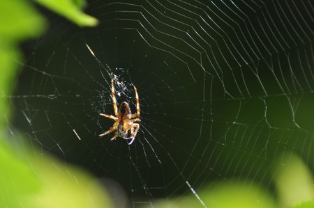 A successful spider has caught an insect in its web at a garden in Karlstad, Sweden