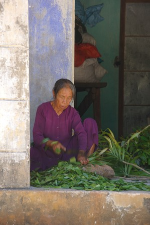 Unidentified nun prepares medical herbs on July 12, 2010 at Cham Island outside Hoi An, Vietnam