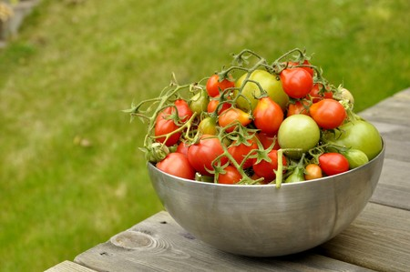 Fresh tomatoes from the garden in Karlstad, Sweden