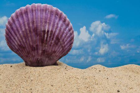 Purple sea shell on beach with blue sky  photo