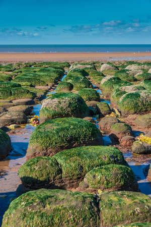 algas verdes: Las algas verdes en las rocas por el mar durante la marea baja Foto de archivo