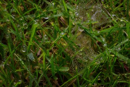 dewey: Dew on grass with small spiders web Stock Photo