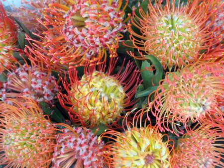 shaped: Exotic flowers circular shaped Stock Photo