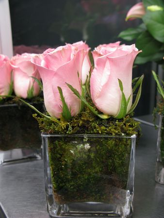Pink Roses in moss and a glass container