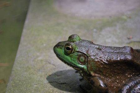 Close-up of a toad on stone photo