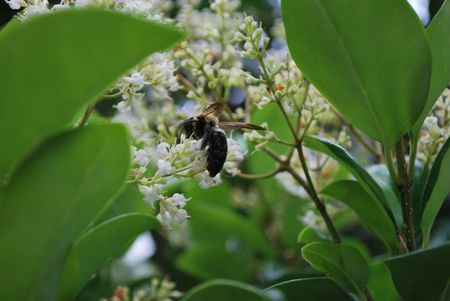 Bee in tree with flowers Stock Photo - 3186467