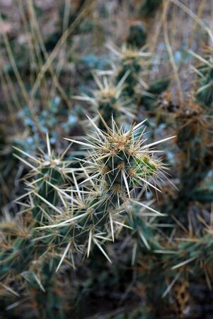 with spines: Cactus Spines