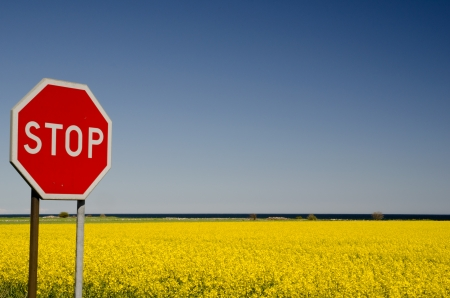 Stop at rape field Stock Photo
