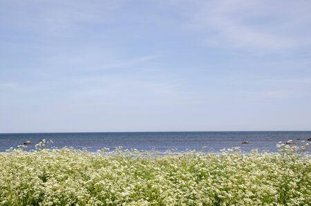 Coastline of bright green grass
