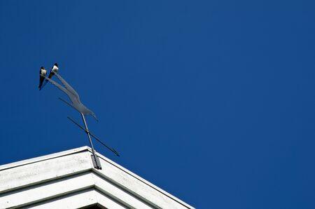 Pair of swallows Stock Photo