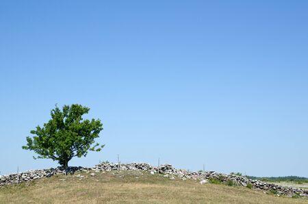 Solitary tree at stonewall