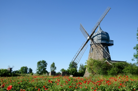 Windmill and poppy field photo