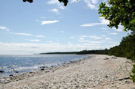 Coastline at forest with glittering water Stock Photo - 14600183