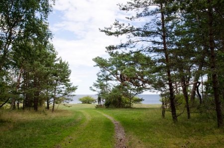Road to the beach at a forest of pine trees photo