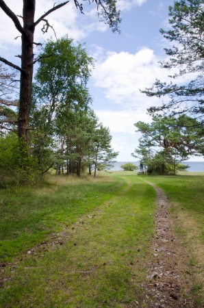 Road to the beach in a pine forest photo