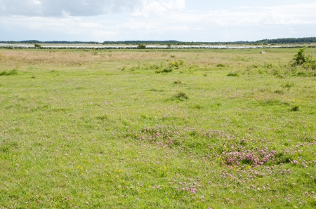 Bay of Baltic sea with clover field photo