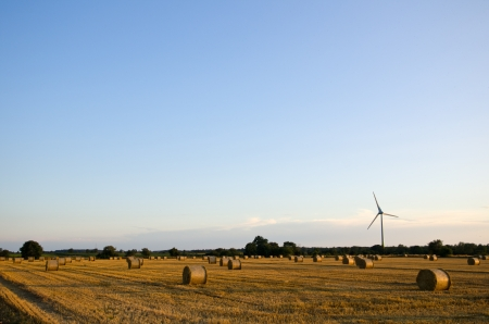 oland: A field of straw bales and a windmill in evening sun