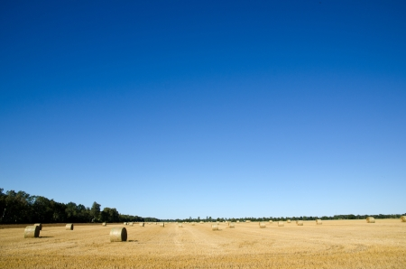 Cloudless sky and a field with straw bales 写真素材