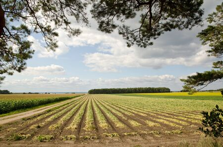 Dirt road in a agricultural landscape Stock Photo - 15498688