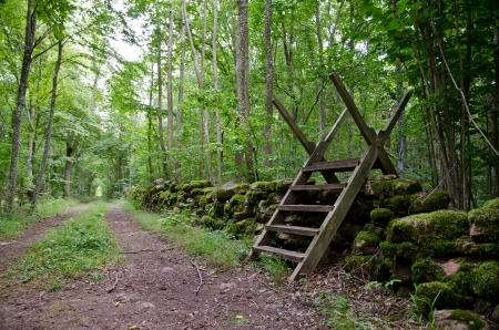 dirtroad: Stile at dirtroad in forest Stock Photo