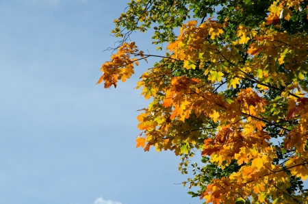Blue sky and autumn leaves photo